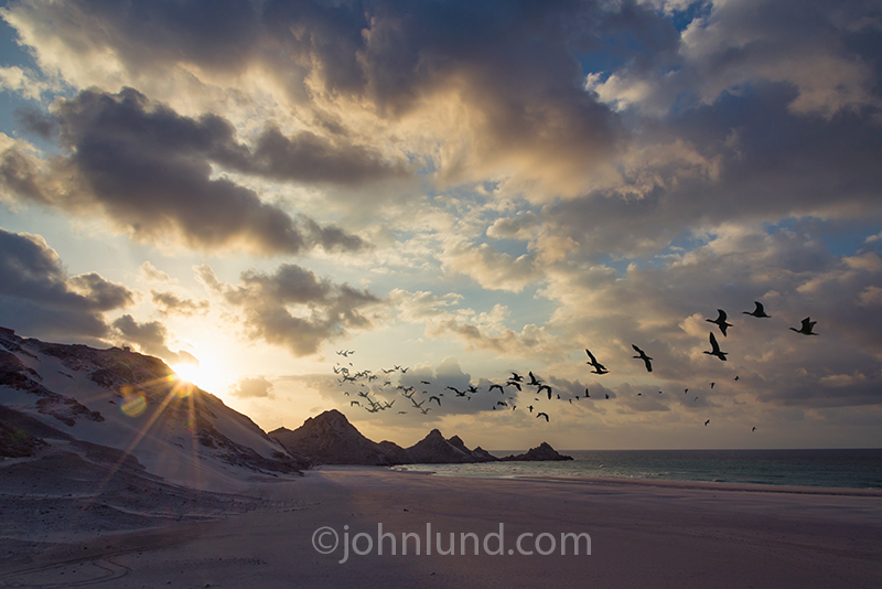 A flight of Cormorants disappears into the sunset on a beautiful beach on the island of Socotra off the coast of Yemen, an incredible destination for getting away from it all and vacationing.