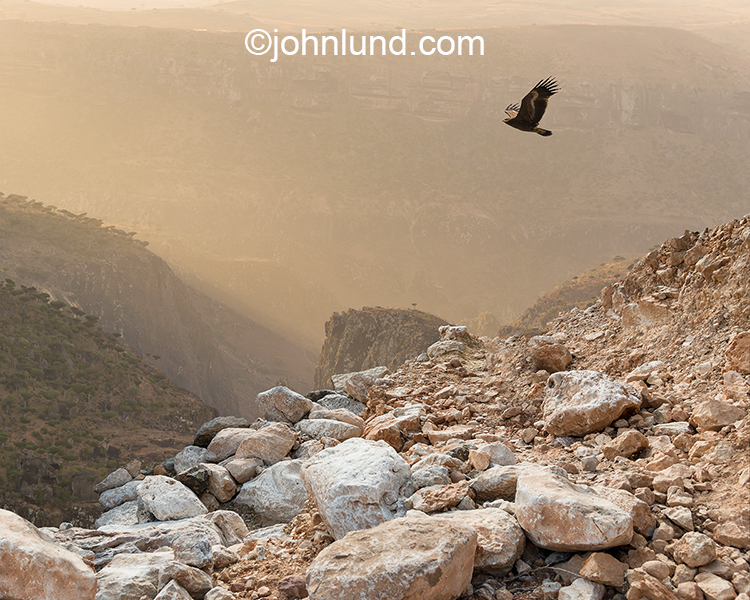 An eagle flies over the rock terrain of the island of Socotra off the coast of Yemen.