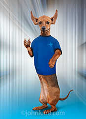 A funny Dachshund masquerades as Spock, from Star Trek, in this funny Animal Antics anthropomorphic animal picture.