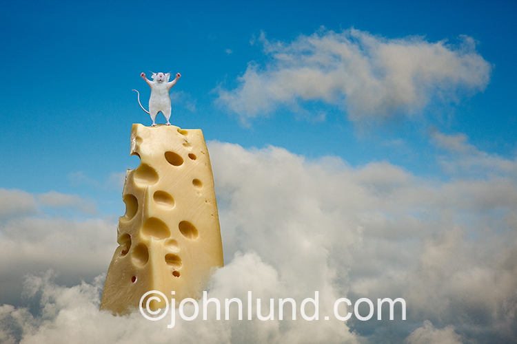 A mouse stands atop a mountain of cheese, arms upraised in victory, in a funny stock photo about success and achievement