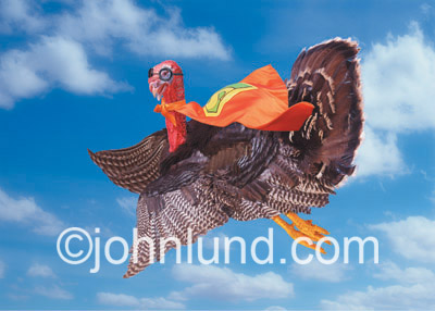 Funny animal antics picture of a turkey dressed as a super hero flying through the sky with a cape and wearing goggles.