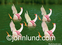 A flock of geese participate in synchronized swimming and wear bathing suit tops in this funny spoof and bird picture.