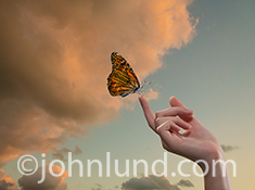 Future technology is the concept behind this image of a butterfly perched lightly on a woman's finger, a butterfly with computer circuitry wings and a metal, mechnical body.