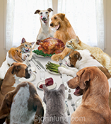 Funny cats and dogs enjoy a thanksgiving dinner feast in a parody of Norman Rockwell's