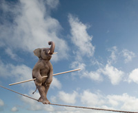 elephant picture - elephant walking a tightrope