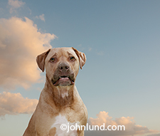 A dog of undetermined breed looks sadly at the camera beneath a blue summer sky.