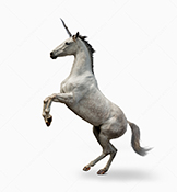 A unicorn rears up on a white background in a stock photo image about mythology and magic.