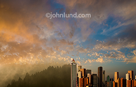This image joins an urban skyline with a forest in a stock photo image about conservation and ecology issues and the balance between urban development and ecological responsibility.