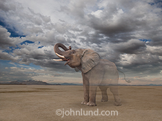 In this photo of an elephant standing alone on a vast empty plain, the great creature begins to fade into nothing in a visual statement about environmental concerns, possible extinction, ecological issues, loss of habitat and the responsible custodianship