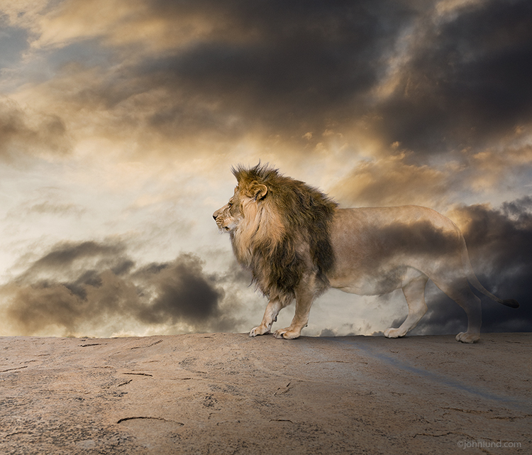 A lion stands before a sky filled with storm clouds, and begins to fade into nothing in a social commentary image about responsible environmental custodianship of natural resources, vanishing species and extinction concerns.
