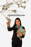 Stock photo of a woman taking bills off of a money tree branch.  The woman is an attractive hispanic or ethnic woman with a bunch of money under one arm as she plucks a bill off a branch of a money tree. White background.