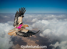 A woman rides a raptor above the clouds, her pink dress blowing in the wind, in a stock photo about freedom, success and courage.