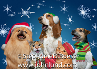 Three dogs and two cats join in a Christmas carol as snowflakes fall around them in this cute and funny Xmas picture.