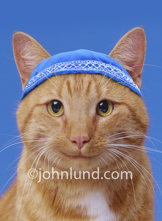 Humorous photo of a cat wearing a yamaka.