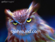 Night shot of an owl with a zoom blur added to add impact and drama to the penetrating stare of the raptor, the bird of prey.