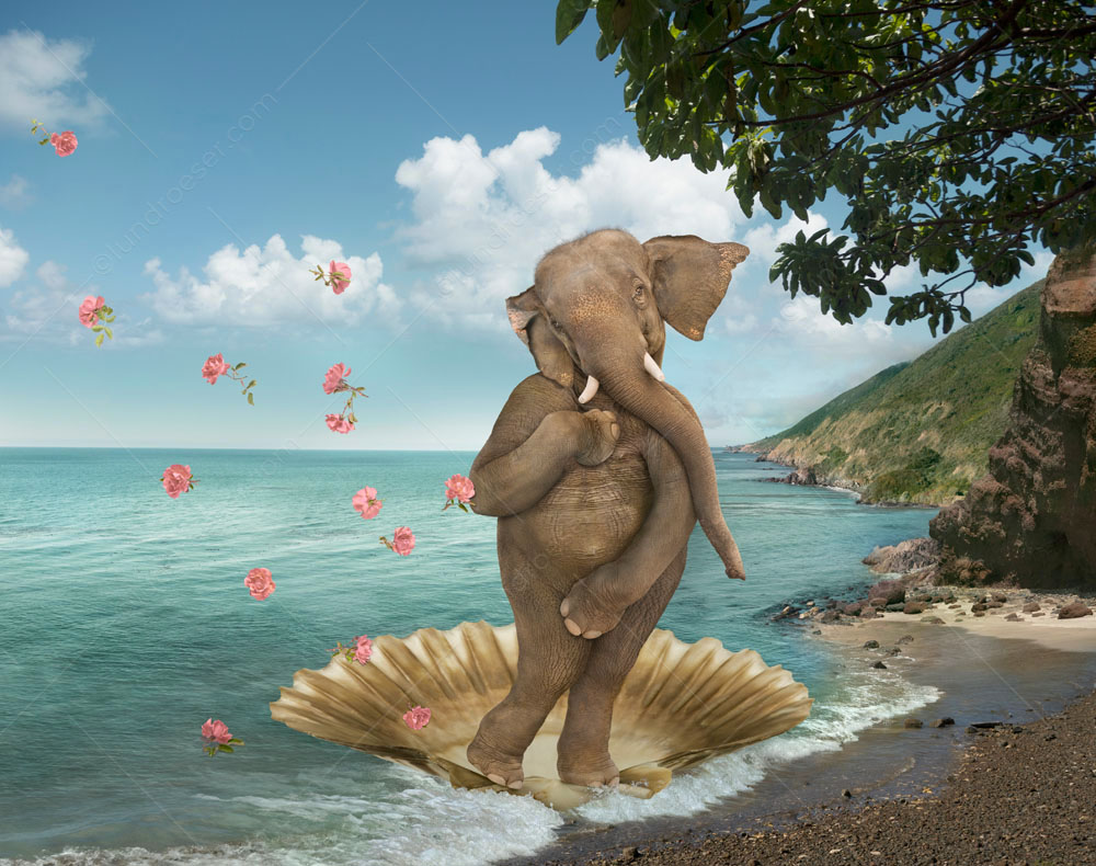 "In a parody of Sandro Botticelli's famous ""Birth of Venus"" painting, Stephanie Roeser substitutes an elephant for the Venus."