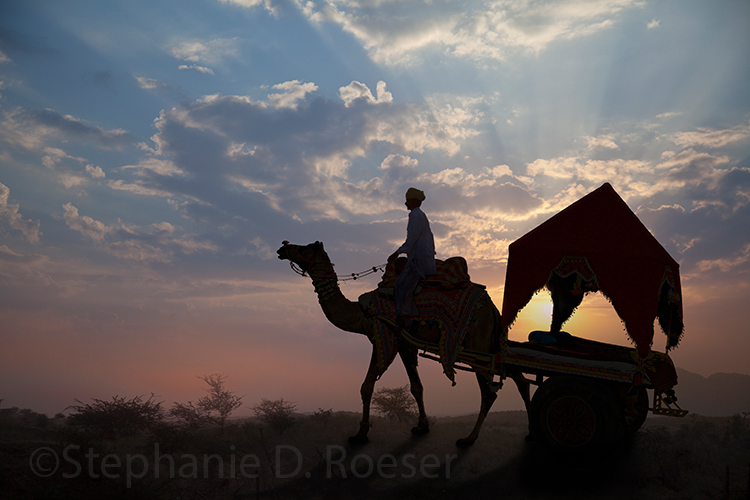 A silhouetted camel pulls a cart at sunset at the Pushkar Camel Fair in Rajasthan, India in this stock photo by Stephanie D. Roeser.