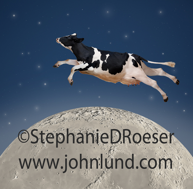 A cow is jumping over the moon under a star filled sky in this funny animal picture featuring a Holstein Cow doing the impossible!