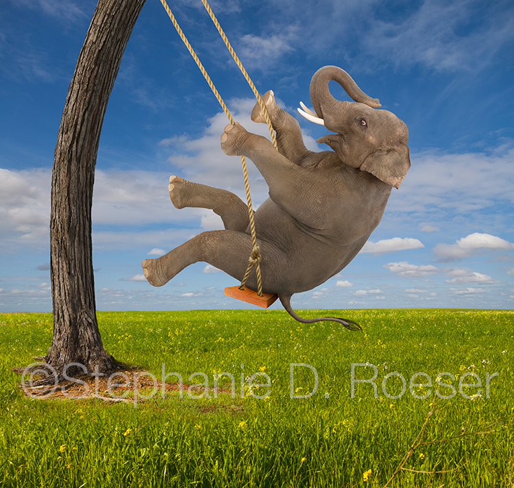 An elephant shows delight and the unexpected as he skillfully enjoys a tree swing on a bright summer day in a humorous stock photo and greeting card image.