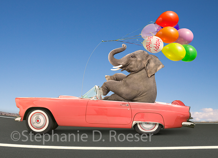 A low riding elephant tools along in a pink thunderbird with birthday balloons attached to the antenna in a funny birthday greeting card image by Stephanie D. Roeser.
