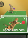 Funny animal photo and stock picture of two cats playing table tennis (ping pong) with paddles (and with gusto).