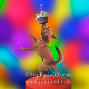 Funny dog picture of a talented Chihuahua balancing a cupcake, complete with birthday candle, on his nose.