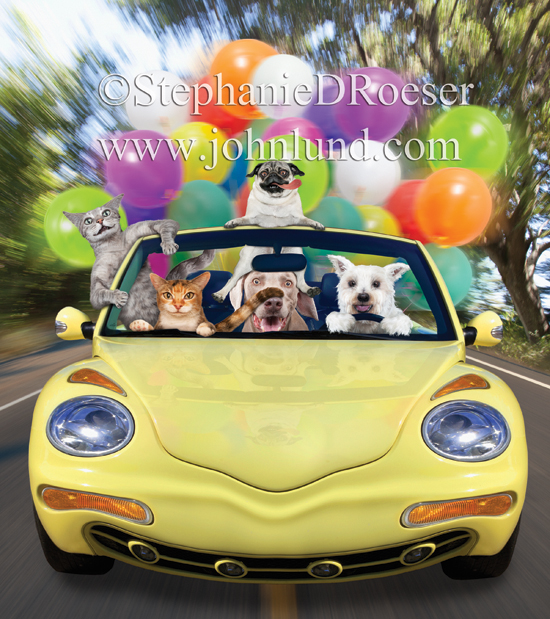 Funny picture of cats and dogs driving and riding in a convertible. With all the balloons...they must be having a party!