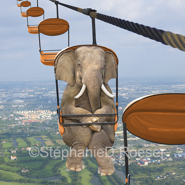 An elephant rides an arial tram in this humorous stock and greeting card image.