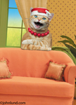 Maude the cat wears a necklace and hat as she leans on the back of the couch and shares her wisdom with us.