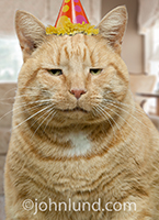Happy birthday images for men: A sourpuss cat offers a wry bit of birthday humor as he wears a smug expression and a party hat.