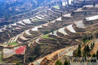 Picture of rice paddies in China on terraced hillsides.