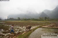 Chinese farmer ploughs his land with a water buffalo as a heavy mist covers the dramatic landscape beyond.