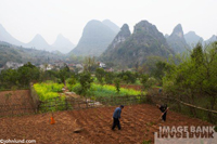 Stock photo of Chinese farmers working in a field with various patches of crops around them and some magnificent looking mountains in the distance.