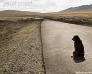 Picture of dog waiting on lonely long stretch of highway heading off into the distance, photographed in Mongolia.