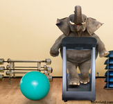 Picture of an elephant running upright on a treadmill in a gym. The absurd and bizarre nature of this picture is part of its charm.