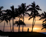 Picture of a woman silhouetted against a golden tropical sunset under palm trees and watching the sun set over the peaceful ocean.