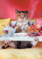 A cuddley cute Cat lays in bed having breakfast on a tray in this funny animal and pet picture - An animal antics picture.