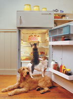 Funny picture of clever pets teaming up to pilfer a cake from the refrigerator in this funny pet and animal photograph. Pictures of animal teamwork.