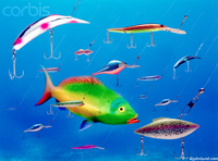Pictures of a fish in a sea of lures illustrating the concepts of temptation, danger and risk.There are all kinds of fish lures in the water.