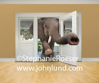 An Elephant is coming through the front door with his trunk already extended well into the room.