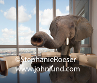 An Elephant, trunk outstretched, stands behind a shiny board room table, a symbol of what problem isn't being talked about and is being outright ignored