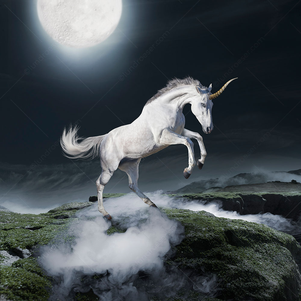 A unicorn prances and rears in an exotic landscape against a full moon in this rare photograph of the mythical creature created by Stephanie D. Roeser as a stock image and greeting card photo.