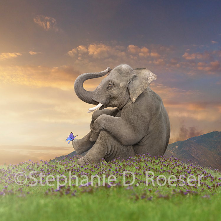 An elephant befriends a butterfly in this serene and beautiful elephant stock photo and greeting card image by Stephanie D. Roeser.
