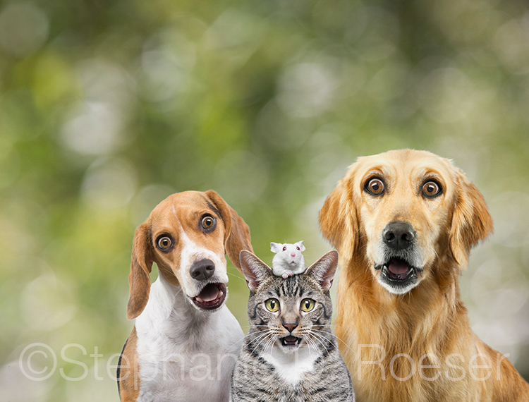 Two dogs, a cat, and a mouse stare in slack-jawed surprise at the viewer in a funny greeting card image and stock photo.
