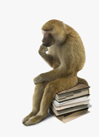 Picture of a monkey as Rodin's thinker. This Baboon sits, in thought, on a stack of books.Picture of a pondering baboon.
