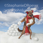 A German Shepard Dog stands by a pile of snowballs wearing a red scarf and ear muffs and preparing to throw one of the icy missles.