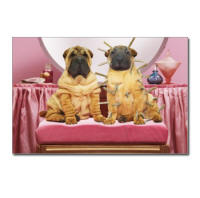 Funny animal picture note cards