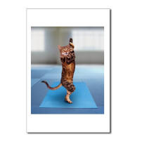 Yoga Cat Postcards - greeting cards