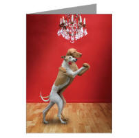 Hilarious Photo of a Whippet and a Wiemeraner Dancing the Tango - A romantic greeting card