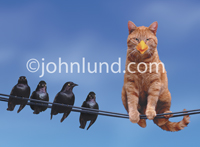 A cat, disguised by wearing a false beak, sits on a telephone wire next to four black birds in a funny animal picture.